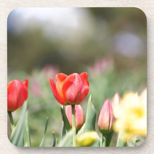 Tulipanes deliciosos posavasos