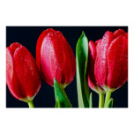 Tulipanes dulces posters