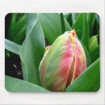 Tulipanes el dormir tapetes de raton