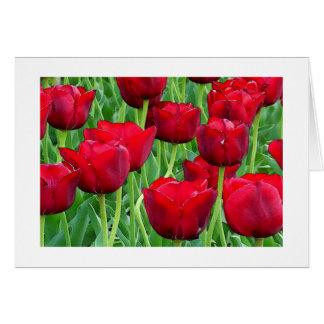 Tulipanes en acuarela felicitacion