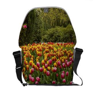 Tulipanes en bolso de la floración bolsa de mensajeria