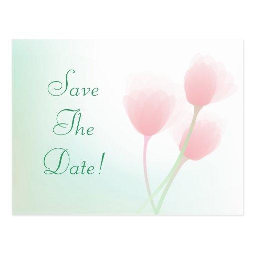 Tulipanes en colores pastel rosados suaves que tarjeta postal