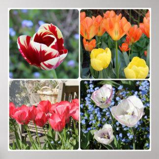 Tulipanes en el collage de la foto del jardín póster