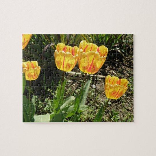 Tulipanes en el rompecabezas de Sun