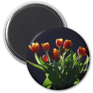 Tulipanes en estudio imán redondo 5 cm