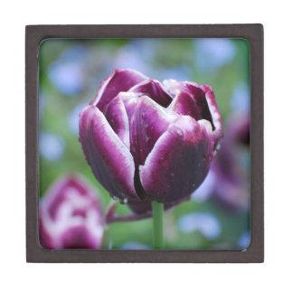 Tulipanes en Holanda Cajas De Regalo De Calidad