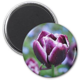Tulipanes en Holanda Imán De Frigorífico