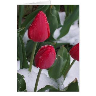 Tulipanes en la nieve tarjeta de felicitación