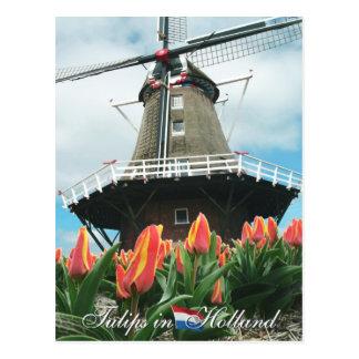 Tulipanes en la postal de Holanda