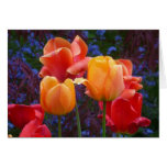 Tulipanes en la tarjeta de la lluvia