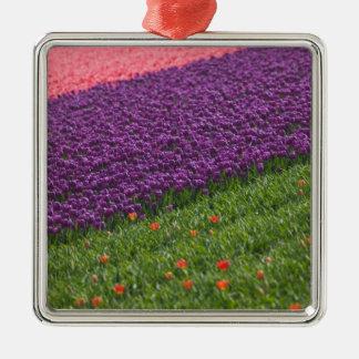 Tulipanes en los jardines de Keukenhof, Amsterdam, Adorno Navideño Cuadrado De Metal