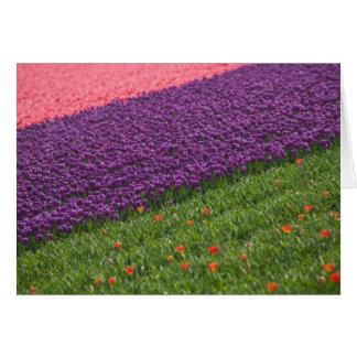 Tulipanes en los jardines de Keukenhof, Amsterdam, Tarjeta De Felicitación
