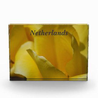 Tulipanes en los Países Bajos