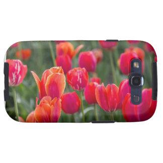 Tulipanes en una caja del teléfono galaxy SIII protectores