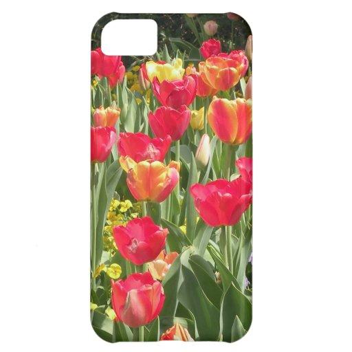 Tulipanes encantadores Barely There