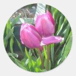 Tulipanes Etiqueta Redonda