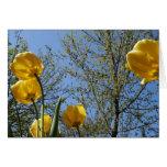 Tulipanes Felicitación