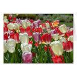 Tulipanes Felicitaciones
