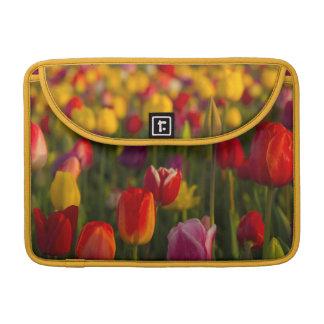 Tulipanes, festival del tulipán, Woodburn, Oregon, Funda Para Macbooks