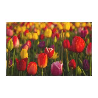 Tulipanes, festival del tulipán, Woodburn, Oregon, Impresiones En Lona