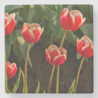 Tulipanes, festival del tulipán, Woodburn, Oregon, Posavasos De Piedra