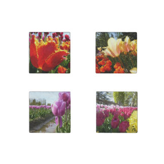 Tulipanes fijados imán de piedra