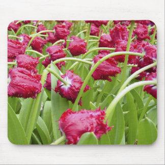 Tulipanes franjados rojo alfombrillas de ratón