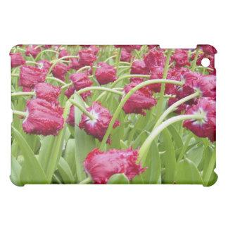 Tulipanes franjados rojo