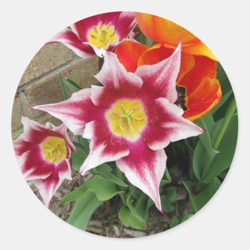 Tulipanes hermosos 2 pegatina redonda