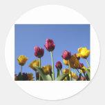 Tulipanes hermosos pegatina redonda