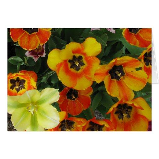 Tulipanes hermosos tarjeta de felicitación
