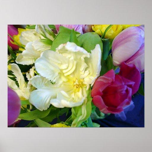 Tulipanes impresión o poster del deslumbramiento
