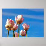 tulipanes inclinados rosa poster