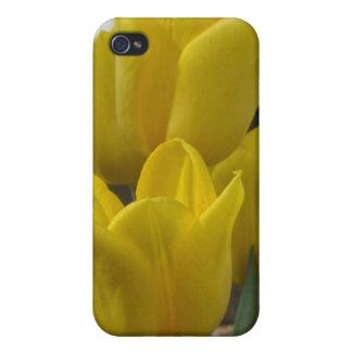 Tulipanes iPhone 4 Fundas