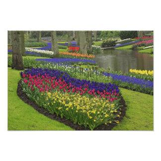 Tulipanes, jacinto de uva, y narcisos, fotografías