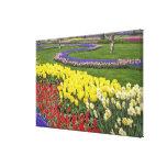 Tulipanes, jacinto de uva, y narcisos, lona estirada galerias
