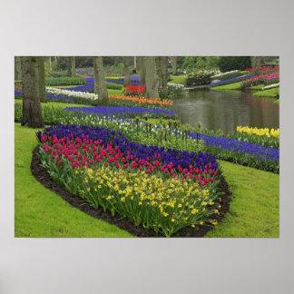 Tulipanes, jacinto de uva, y narcisos, póster
