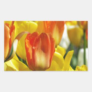 Tulipanes jardines