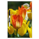 Tulipanes jardines pizarra blanca