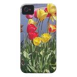 Tulipanes multicolores CAM00235.jpg Case-Mate iPhone 4 Protector