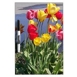 Tulipanes multicolores CAM00235.jpg Pizarra