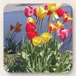 Tulipanes multicolores CAM00235.jpg Posavasos De Bebidas