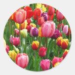 Tulipanes multicolores pegatinas