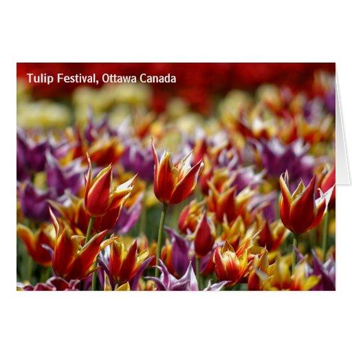 Tulipanes multicolores tarjeta