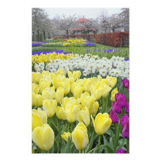 Tulipanes, narcisos, y flores del jacinto de uva, cojinete