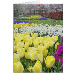 Tulipanes, narcisos, y flores del jacinto de uva, tarjeta de felicitación