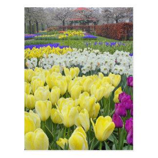 Tulipanes, narcisos, y flores del jacinto de uva, tarjeta postal