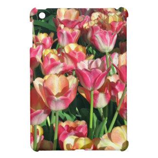 Tulipanes perfectos del rosa y del melocotón