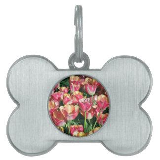 Tulipanes perfectos del rosa y del melocotón placas mascota