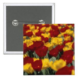 Tulipanes Pin Cuadrado